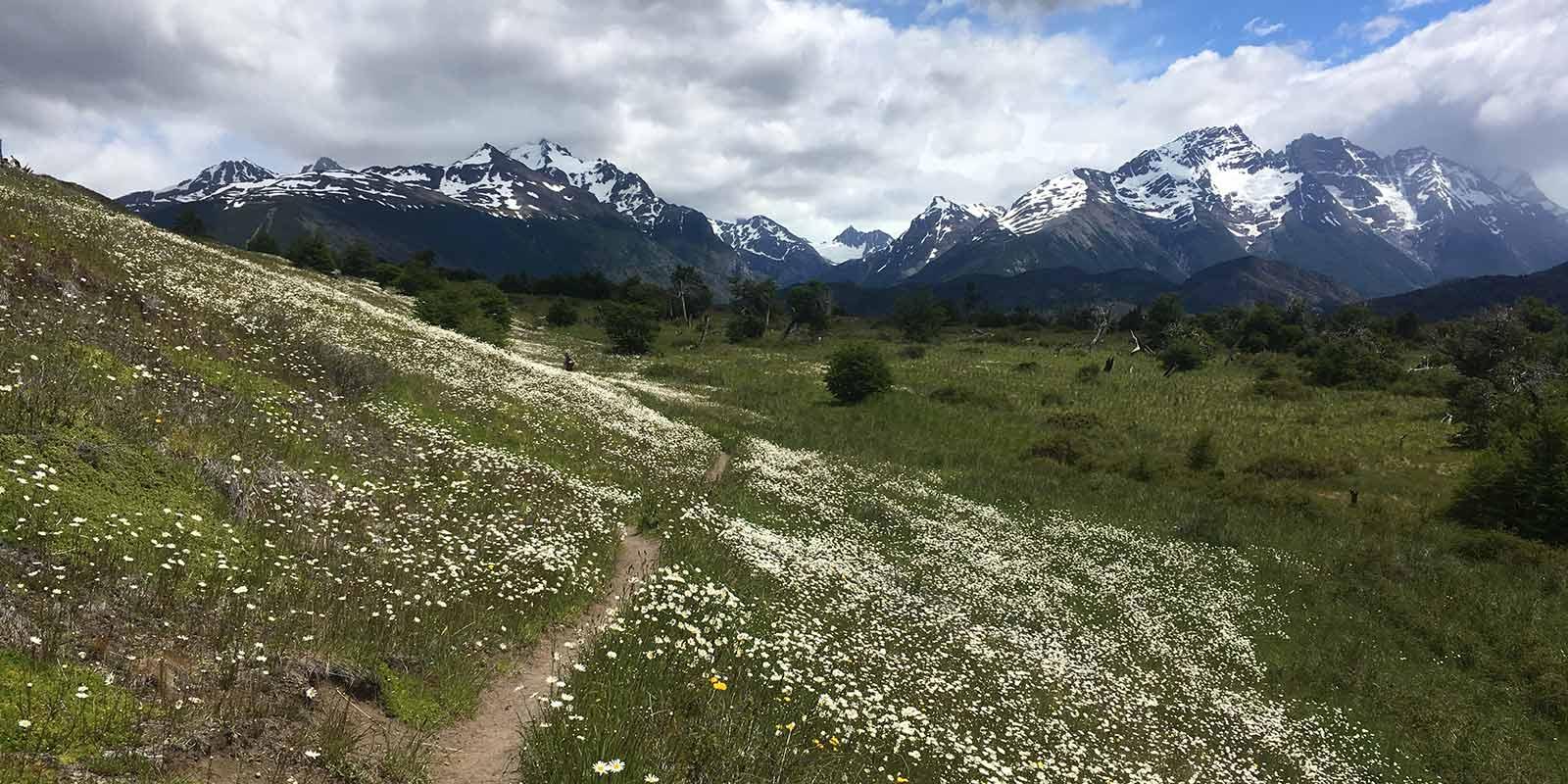 Trail Dickson